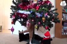 Weihnachtsbaum-Zerstörer