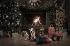 Hunde-Weihnachten