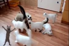 Katzen Gaudi