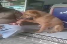 Der Hund hat auch Bedürfnisse