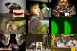 Nette-Tierbilder.ppsx auf www.funpot.net