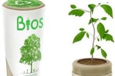 Die Bio-Urne