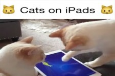 Cats on Ipads - Katzen und Ipads