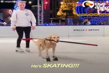 Dog That Nobody Wanted, Loves Ice Skating -