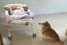 Klasse Babysitter