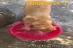 Tiere-machen-alles-nach.mp4 auf www.funpot.net
