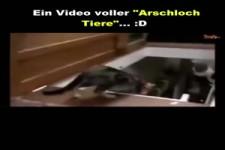 Ein Video voller Arschloch Tiere.....
