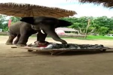 Elefanten-Massage