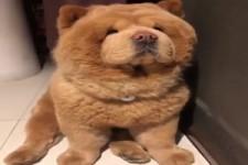 Ein geduldiger Hund