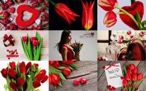 Valentine Tulips - Valentinstag Tulpen