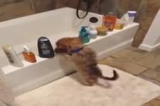 Kleiner Hund macht Unsinn....
