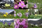 Alpen-Flora---Zwitserland---Alpenflora---Schweiz.ppsx auf www.funpot.net