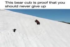 Dieses Bärenjunge beweist es uns - Gib niemals auf