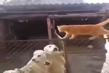 Die Hunde stören mich nicht
