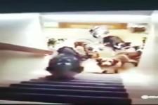 Hunde im Griff