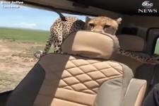 Besuch im Auto