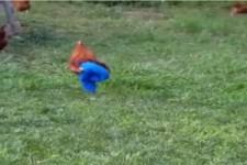 Das falsche Huhn