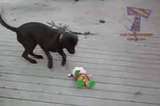 So lustig reagieren Hunde auf den Weihnachtsmann