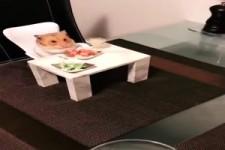 Hamster-Tisch