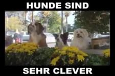 Hunde sind sehr clever