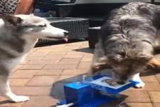Die beiden haben Spaß