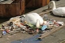 ein Nest mit Müll gebaut