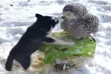 grenzenlose Tierliebe