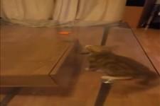 Junge Katze kommt nicht an Leckerli