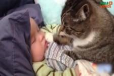 Süße Babys und die Stubentiger