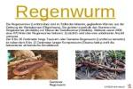 ungewöhnliche-Tiere---Regenwurm.pps auf www.funpot.net