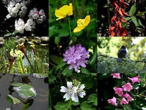 Botanische tuin Kerkrade (Mei 2015) - Botanischer Garten