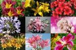 Lilies---Lilien.ppsx auf www.funpot.net