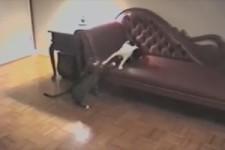 Wie Hund und Katze