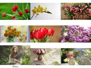 Fleurs 1 - Blumen 1