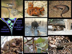 Bilder-Galerie vom 12022019 Tiere 1