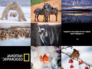 Tiere und Natur