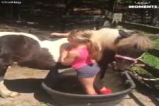 Pferde-Liebe