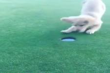 So mach Golf Spaß