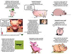 Du armes Schwein