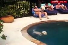 Lustiges mit Hunden