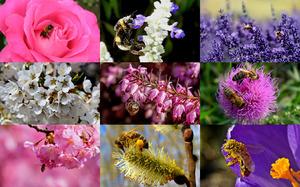 Honey Bees - Honigbienen