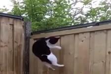 Da haut keine Katze mehr ab