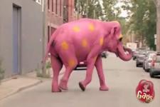 Rosa Elefant ??