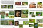 ungewöhnliche-Tiere---Wiesenknopf-Ameisenbläuling.pps auf www.funpot.net