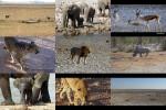 Namibias-Tierwelt.pps auf www.funpot.net