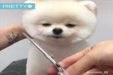 Süsse Hunde beim Friseur