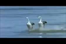 Witzige Vögel