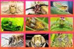 Sensationelle-Makrofotografie.ppsx auf www.funpot.net
