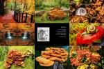 Momo's-Herbst-Poesie.ppsx auf www.funpot.net