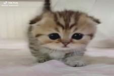 Flauschiges Kätzchen